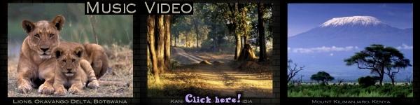 Video Art Wolfe 1