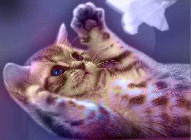 Katzen - Bücher - Kalender - Ratgeber - Gesundheit - Pflege
