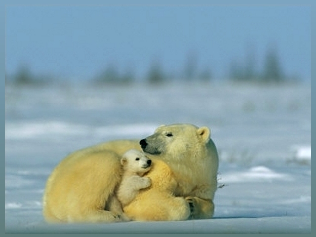 Bear Photo - Mother and Cub