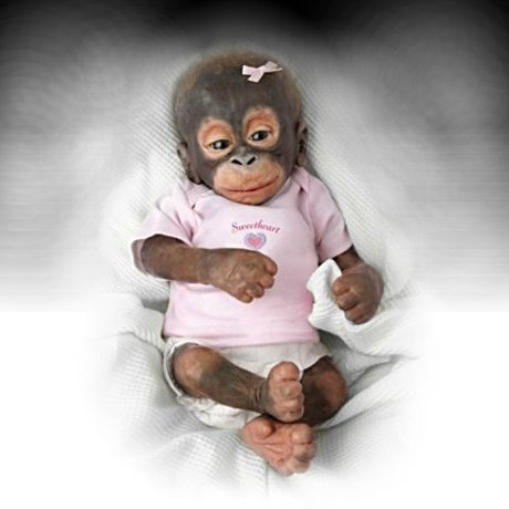 Baby Capuchin Monkey In Clothes - 26.1KB